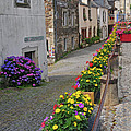 A Line Of Flowers In A French Village by Dave Mills