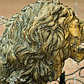 A Lion In Summer by Steve Harrington
