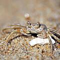 A Little Crabby by Lori Tambakis