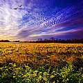 A Little Further South by Phil Koch