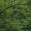 A Lush Green Eastern Woodland View.  An by Bates Littlehales