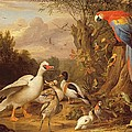 A Macaw - Ducks - Parrots And Other Birds In A Landscape by Jakob Bogdani