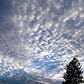A Mackerel Sky by Will Borden