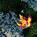A Maple Leaf Lies On A Bed Of Moss by George F. Mobley