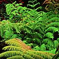 A Mass Of Ferns by Paulette B Wright