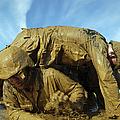 A Midshipman Crawls Through Fellow by Stocktrek Images