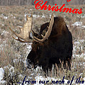 A Moose Christmas Wish by DeeLon Merritt