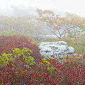 A Natural Garden At Dolly Sods Wilderness Area by Bill Swindaman