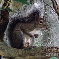 A nutty Squirrel
