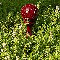 A Orb In Thyme by Douglas Barnett