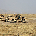 A Pair Of U.s. Army Cougar Mrap by Terry Moore