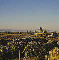 A Panoramic View Of A Vineyard by Kenneth Garrett