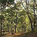 A Path Through A Sparse Forest And Trees by Ashish Agarwal