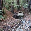 A Peaceful Redwood Creek On Mt Tamalpais by Ben Upham III