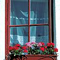 A Perfect Window by Carl Purcell