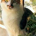 A Pet And Christmas by Caroline Stella