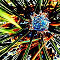 A Piney Abstract by Beth Akerman