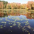 A Pond Of Reflective Beauty by Kim Galluzzo Wozniak