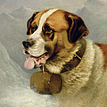 A Portrait Of A St. Bernard by James E Bourhill