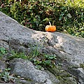 A Pumpkin In Central Park by Rob Hans