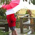 A Rainy Summer's Day by Karol Livote