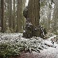 A Rare Snow Dusts The Trail Through Del by Michael Nichols