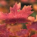 A Red Fall  by Saija  Lehtonen