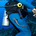 A Remora Attached To A Diver, Kimbe by Steve Jones