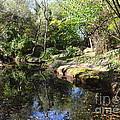 A River In The Wilderness by Carol  Bradley