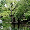A River Runs Through Central Park  by Lorraine Devon Wilke