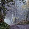 A Road Through A Misty Wood by Mattias Klum