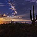 A Saguaro Sunset  by Saija  Lehtonen
