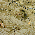 A Seabee Emerges From Muddy Water by Stocktrek Images