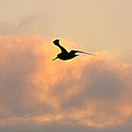 A Seagull Takes Flight by Bill Cannon