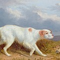 A Setter On The Moor by Philip Reinagle