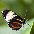 A Side View Of A Butterfly by Taylor S. Kennedy