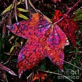A Single Sweetgum Leaf by Judi Bagwell
