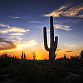 A Sonoran Sunset  by Saija  Lehtonen