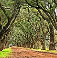 A Southern Lane by Steve Harrington