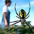 A Spider Beside Her by Bill Pevlor
