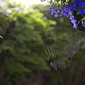 A Spider Web In A Garden by Taylor S. Kennedy