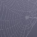 A Spider's Handiwork by Doris Potter