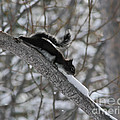 A Squirrel Snow Cone by Mitch Shindelbower