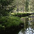 A Stream Wanders Through A Lush Taiga by Mattias Klum