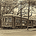 A Streetcar Named St. Charles Sepia by Steve Harrington