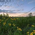 A Summer Evening Sky With Yellow Tansy by Dan Jurak