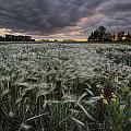 A Summer Sunrise With Storm Clouds by Dan Jurak