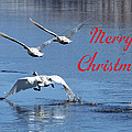 A Swan Christmas by DeeLon Merritt