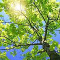 A Tall Tree by Don Hammond
