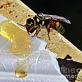 A Taste Of Honey by Rebecca Morgan